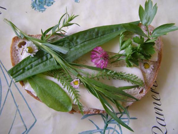 Chlieb s bylinkami - sedmikrásky, skorocel, palina dračia  - estragon, ďatelinka, púpavový list, rebríček, ligurček lekársky...